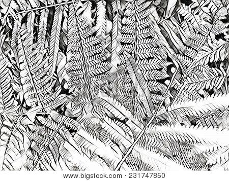 Black And White Fern Leaf Digital Illustration. Fern Leaf Carpet. Abstract Floral Background. Summer