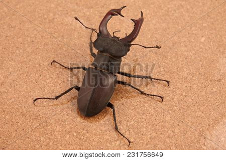 The A Beetle Deer On A Cork Background