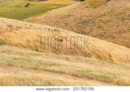 Yellow Dry Grass On Rolling Hills. Picturesque Nature Background