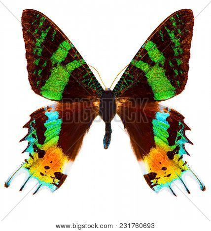 Madagascan sunset moth (Chrysiridia rhipheus) is a Uraniidae butterfly endemic to Madagascar. Isolated on white