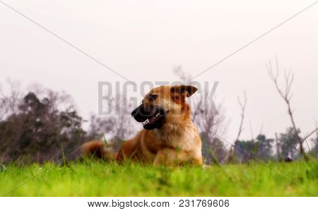 A Wild Dog Is Lying In The Grass.