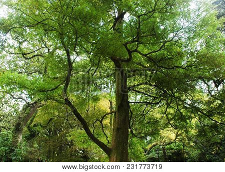 A Giant Tree Covered With Luminescent Green Leaves, With The Branches Black In Contrast. It Is Surro