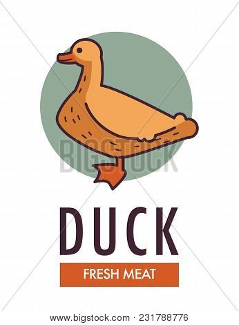 Duck Fresh Meat Commercial Logo With Domestic Bird. Poultry With Soft Feathers And Red Beak On Promo