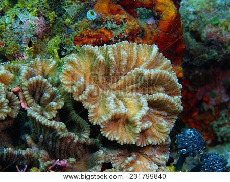 The Amazing And Mysterious Underwater World Of The Philippines, Luzon Island, Anilаo, Stone Coral