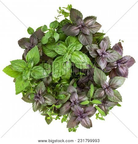 Fresh spices and herbs bouquet isolated on white background cutout. Sweet basil, red basil leaves, marjoram and thyme bunch. Top view.