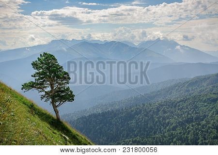 Pine Grows On A Steep Slope Of The Caucasus Mountains On A Sunny Day. Adygea, Russia