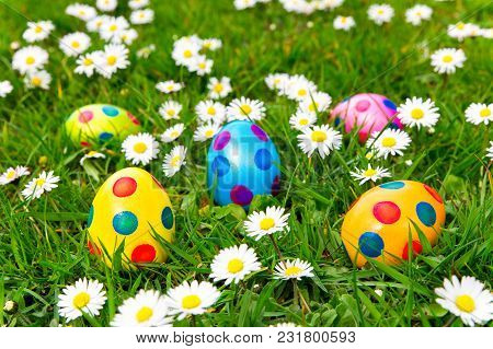 Colored Painted Easter Eggs In Green Grass With  Flowering White Daisies