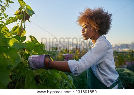 african american woman tending to crops in communal urban garden