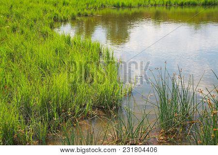 Nature, Natural Landscape, Reeds At The Pond