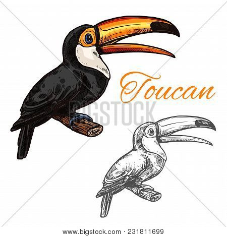 Toucan Exotic Bird Sketch Icon. Vector Isolated Symbol Of Toucan Or Toco Aracari And Toucanet Specie