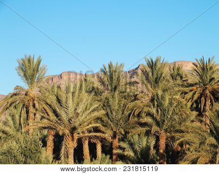 Landscapes Of Green Palm Trees In Oasis At Canyon In Central Morocco In Old Village Of Oulad Near Za