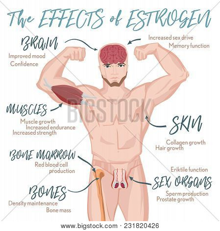 Testosterone Effects Infographic Image Isolated On A Light Blue Background. Male Sex Hormone And It
