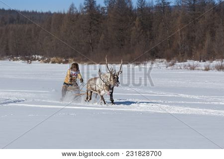 Iengra, Neryungri District, Yakutia, Russia. March 3, 2018 Racing Reindeer On The Celebration Of The