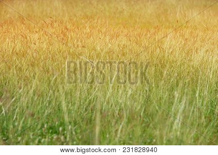 Beautiful Soft Reflection View Of The Sun Light On Green And Yellow Field