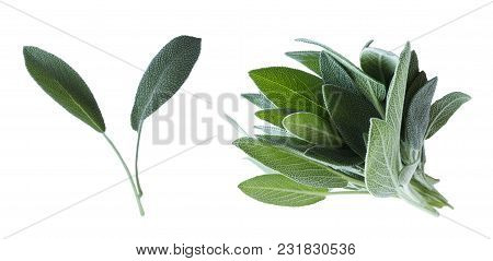 Fresh Sage Leaves In Wooden Bowl Isolated On White Background. Top View. Salvia With Copy Space For