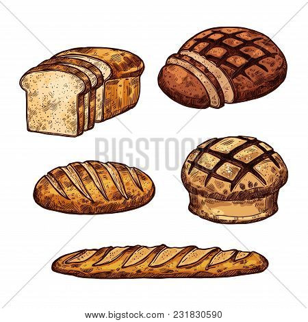 Bread Sketch Icons For Bakery Shop Or Baked Products Vector Isolated Set Of Wheat Loaf And Rye Bagel