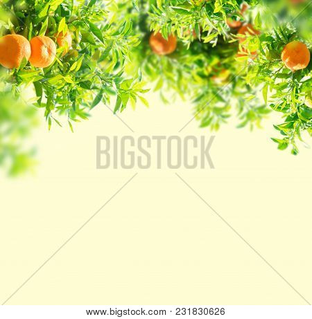 Garden With Orange Tree Branches Over White Background