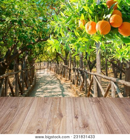 Garden With Orange Tree Branches And Wooden Planks