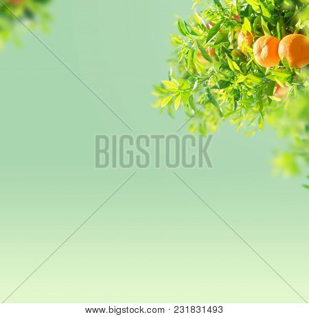 Garden With Orange Tree Branches Over Blue Sky Background With Copy Space