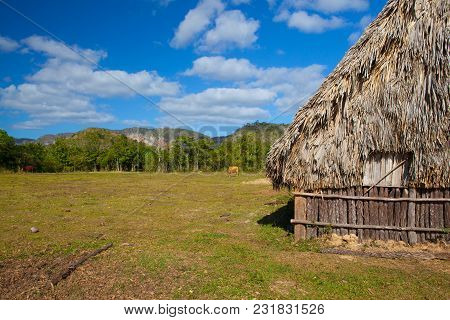 Typical Barn On Tobacco Plantations.barn Used For Curing Tobacco. The Vinales Valley, Pinar Del Rio,