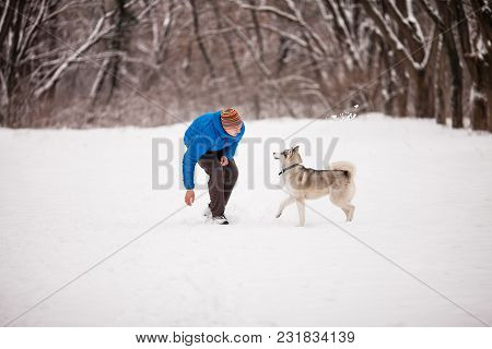 Winter Games With Dog. Man Throws A Stick For Husky