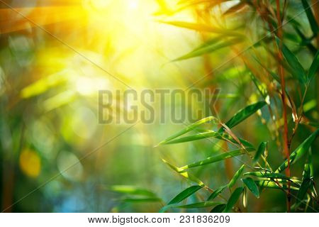 Bamboo. Bamboos Forest. Growing bamboo border design over blurred sunny background. Space for your text. Nature backdrop