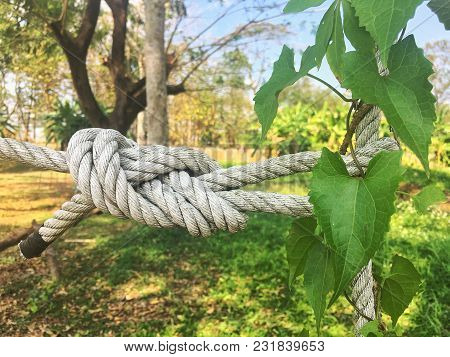 The White Rope Is Held Tight For A Long Time.