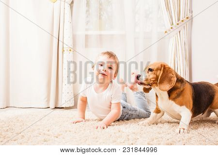 The Boy And The Dog Are Playing On The White Carpet