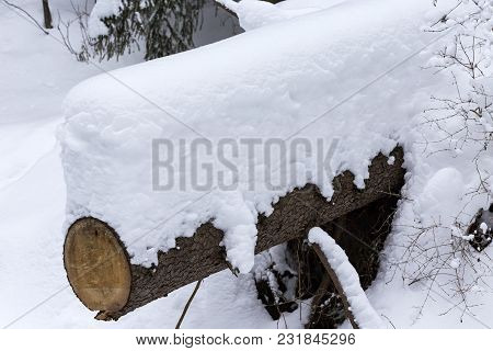 Tree Trunk Covered With Fresh Snow In Winter Season