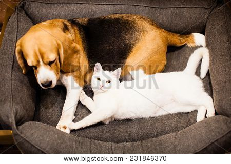The Cat And The Dog Are Lying Together