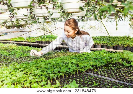 Young Woman Biologist With Sprout In Greenhouse