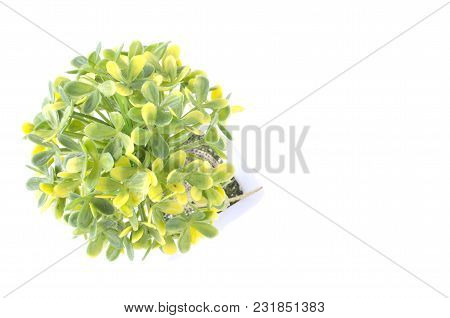 Artificial Green Plant On White Background.negative Space For Text