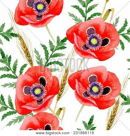 Wildflower Poppy Flower Pattern In A Watercolor Style. Full Name Of The Plant: Poppy, Papaver, Opium