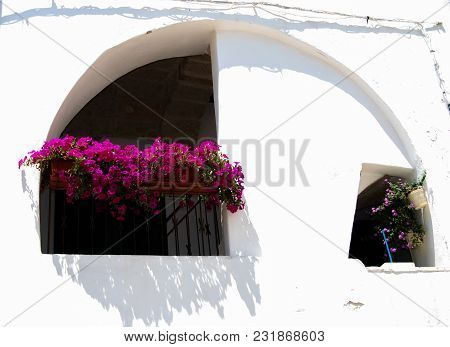 Typical White Houses  With Pink Petunias Flowers In Polignano A Mare