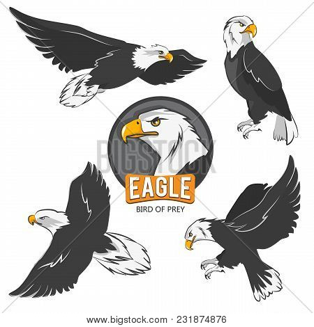 Collection Of Cartoon Eagles. Flying Birds Isolate On White. Eagle Animal Flying, American Predatory