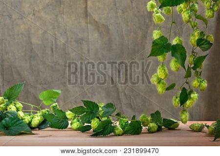 Hop Cones Before Harvest With Brown Background