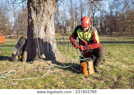 Arborist Men Standing Against Two Big Trees. The Worker With Helmet Working At Height On The Trees.