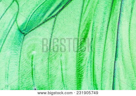 Detailed macro photo of a shiny green tropical butterfly wing