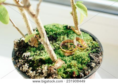 Gold Wedding Bridal Rings On A Moss 1