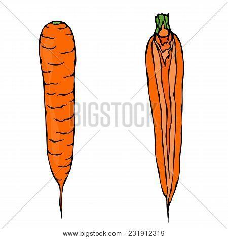 Fresh Orange Carrots. Half Of Carrot. Sliced Carrot. Ripe Vegetables. Carrots With Tops. Vegetarian