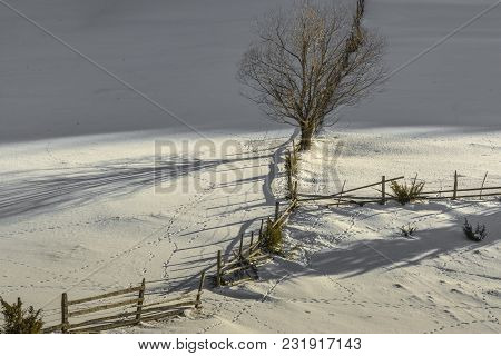 Idyllic, Rural Winter Scenery With An Old Wooden Fence And An Solitary Tree.