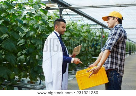 Young farmer showing agroengineer harvest of vegetables in box and listening to his opinion