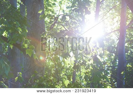 tree branches with blue sky in background and fresh spring leafs close up ready for double exposure mask selection
