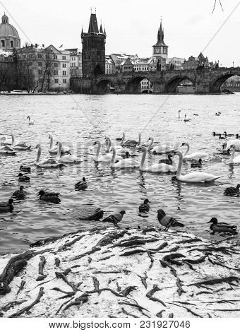 Riverbank of the Vltava River overlooking Charles Bridge, Prague, Czech Republic