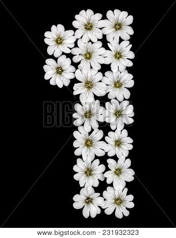 Arabic Numeral 1, One, From White Flowers Of Cerastium Tomentosum, Isolated On Black Background