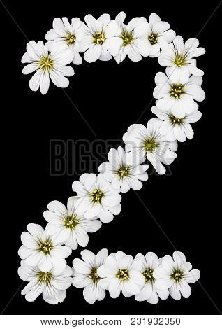 Arabic Numeral 2, Two, From White Flowers Of Cerastium Tomentosum, Isolated On Black Background