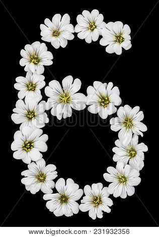 Arabic Numeral 6, Six, From White Flowers Of Cerastium Tomentosum, Isolated On Black Background