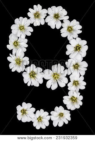 Arabic Numeral 9, Nine, From White Flowers Of Cerastium Tomentosum, Isolated On Black Background