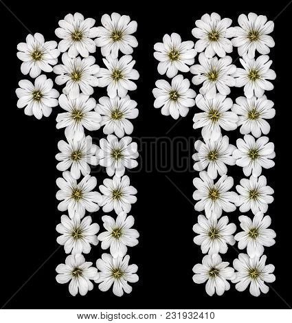 Arabic Numeral 11, Eleven, One, From White Flowers Of Cerastium Tomentosum, Isolated On Black Backgr