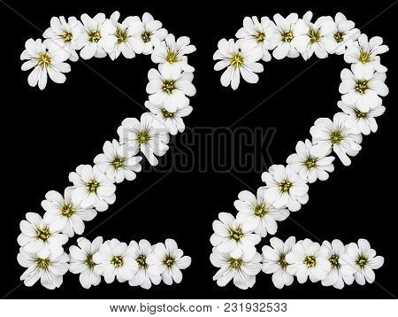 Arabic Numeral 22, Twenty Two, Twenty, Two, From White Flowers Of Cerastium Tomentosum, Isolated On